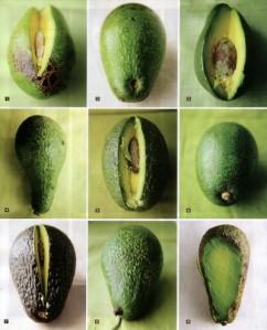 2007 09 saveur avocado love - Best Guacamole