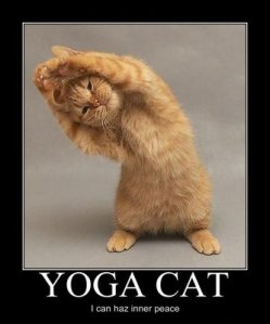 "yoga cat - ""I can haz inner peace?"""